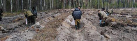 Лесовосстановлению  -  особое  внимание